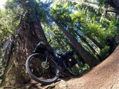Surly meets Redwood